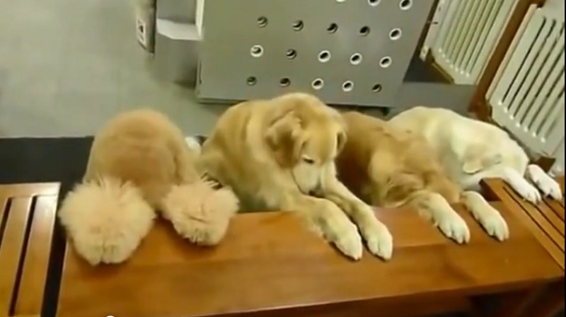Dogs Praying