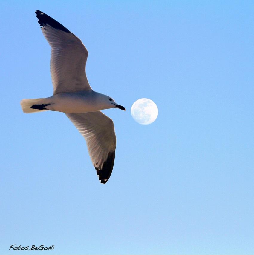 Moon-19