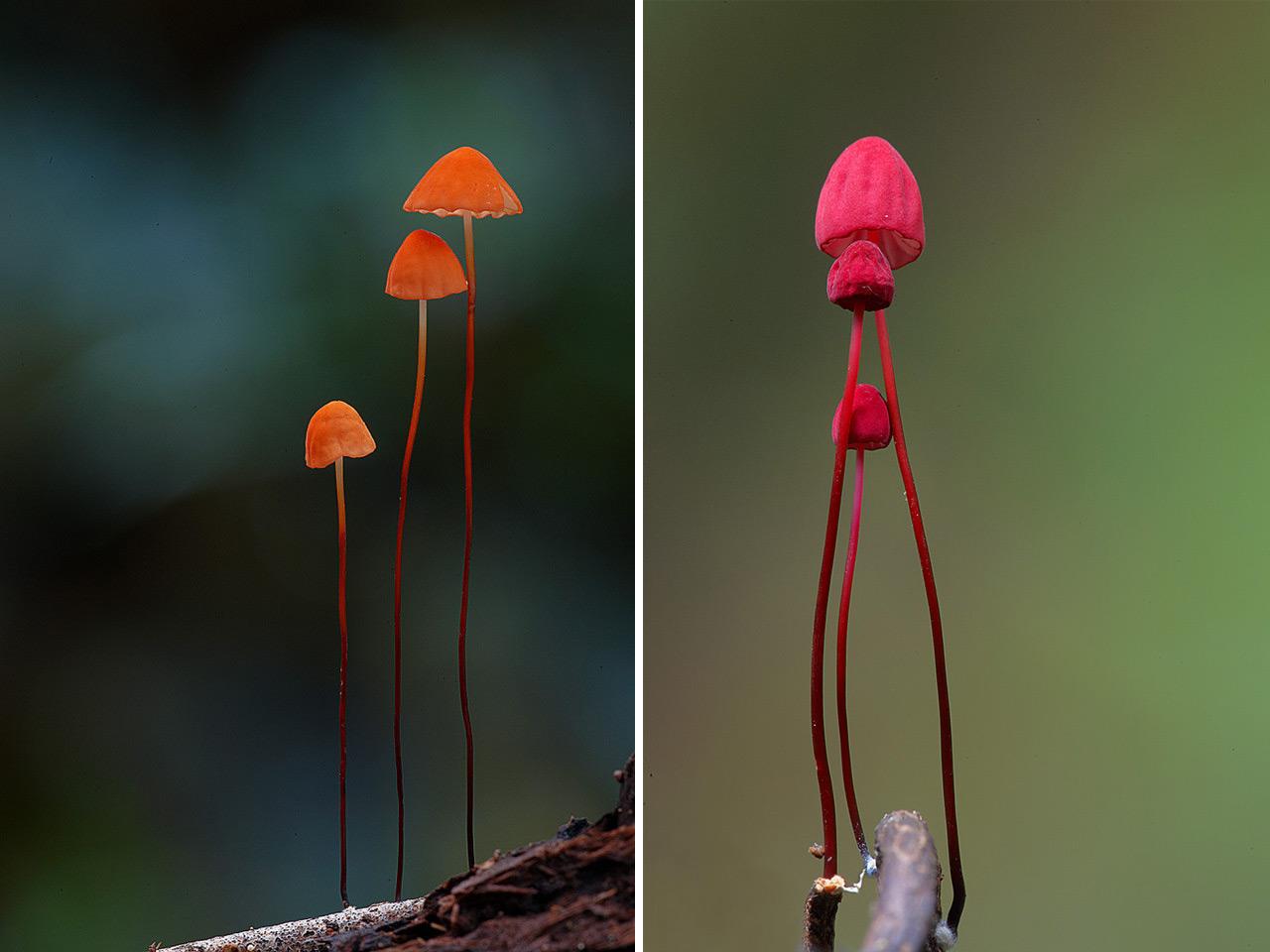 Fungi - Mushroom - Steve Axford  - 11