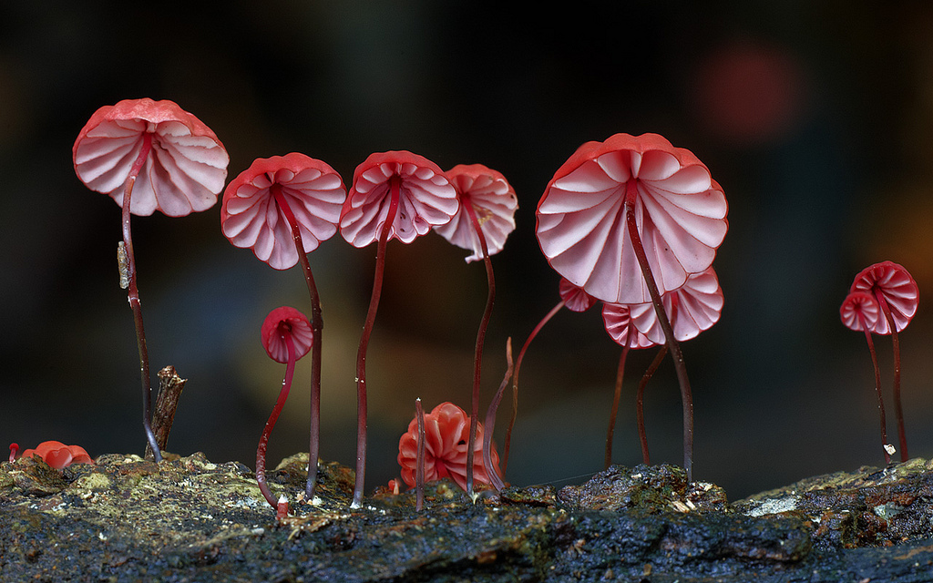 Fungi - Mushroom - Steve Axford  - 2