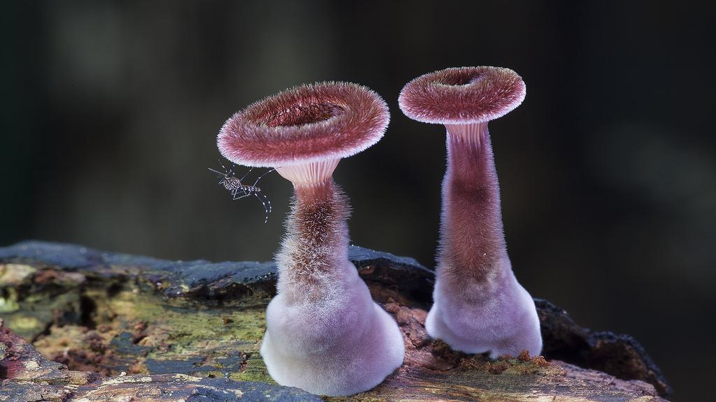 Fungi - Mushroom - Steve Axford  - 4