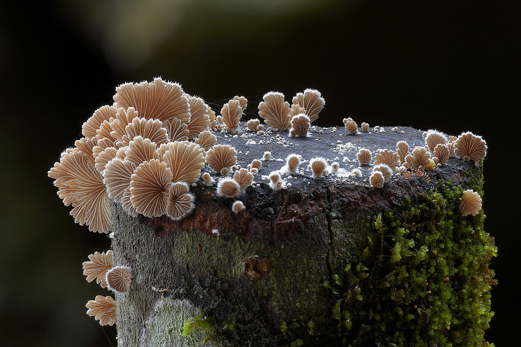 Fungi - Mushroom - Steve Axford  - 5