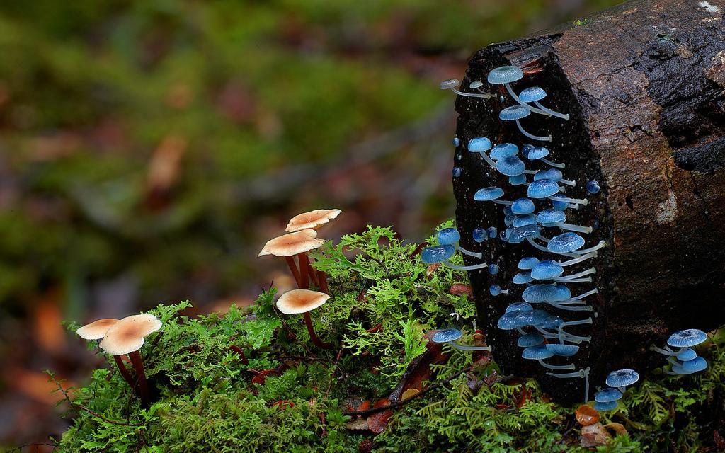 Fungi - Mushroom - Steve Axford  - 7