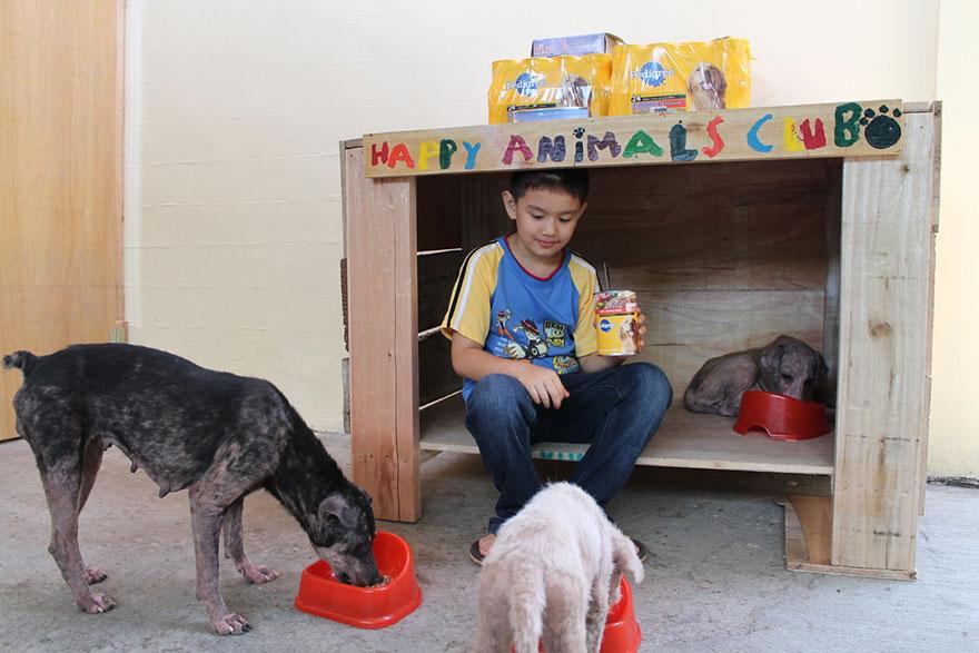 Ken - happy-animals-club-pet-shelter 1