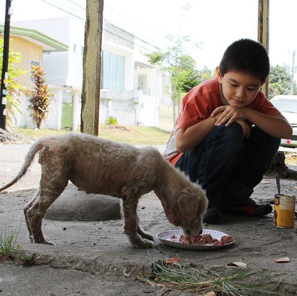 Ken Happy Animals Club Pet Shelter
