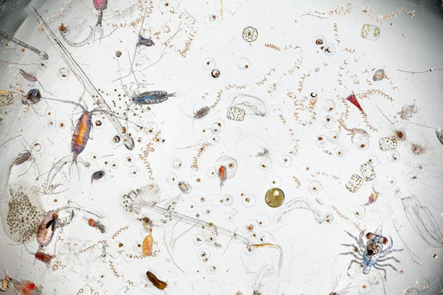 david liittschwager - magnified drop of seawater