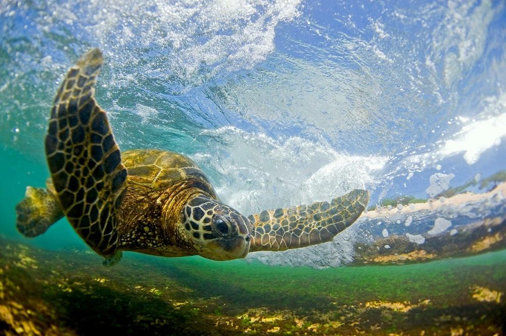 Clark Little - ocean surf wave photos 8754656