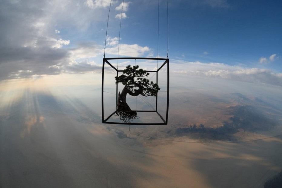 Makoto Azuma - Botanical Space Flight  - white pine bonsai   2135214