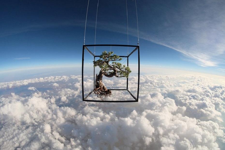 Makoto Azuma - Botanical Space Flight  - white pine bonsai