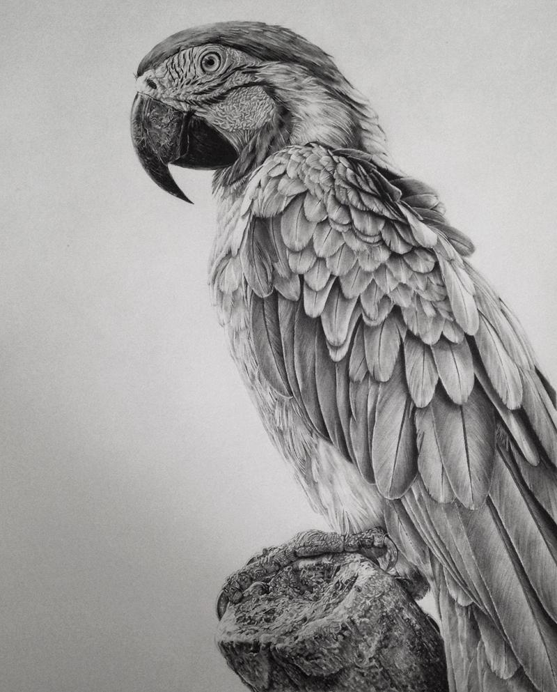Monica Lee graphite pencil drawings 63652422