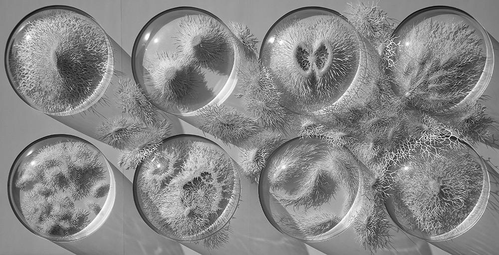 Rogan Brown - Outbreak - Paper Microbes  2-584572