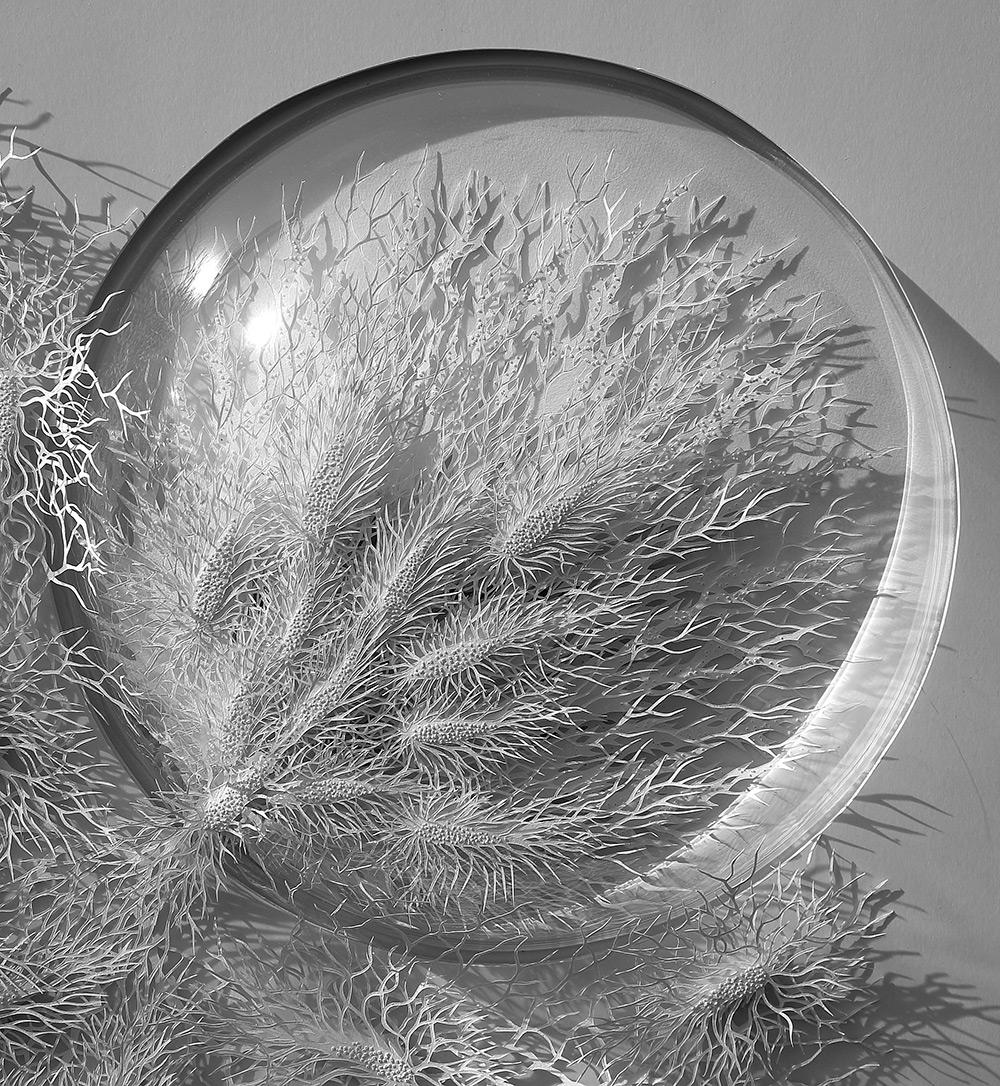 Rogan Brown - Outbreak - Paper Microbes  5-98542