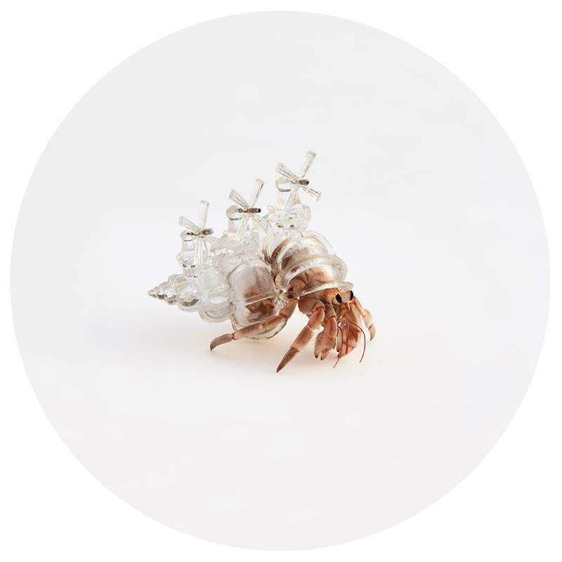 aki inomata hermit crab 3d printing 696325