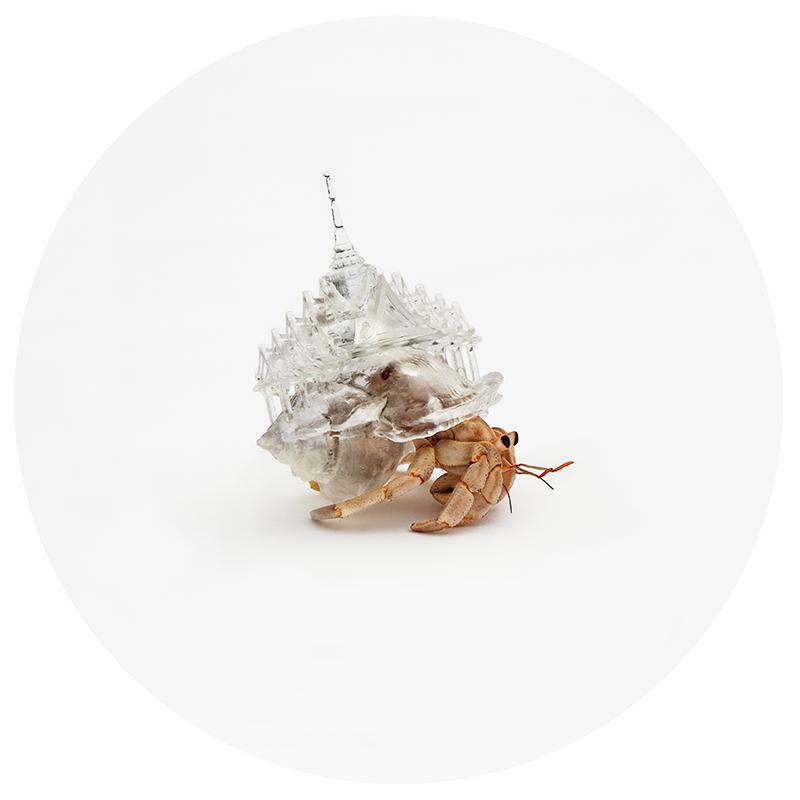 aki inomata hermit crab 3d printing 6965336