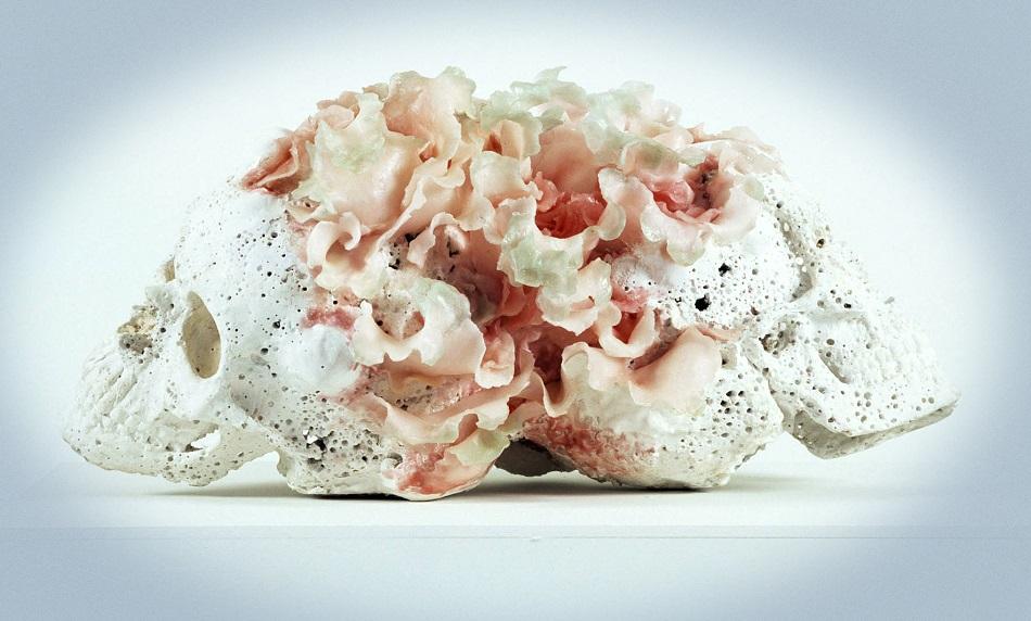 Rebecca Stevenson - Animals Art Flowers - 3956323