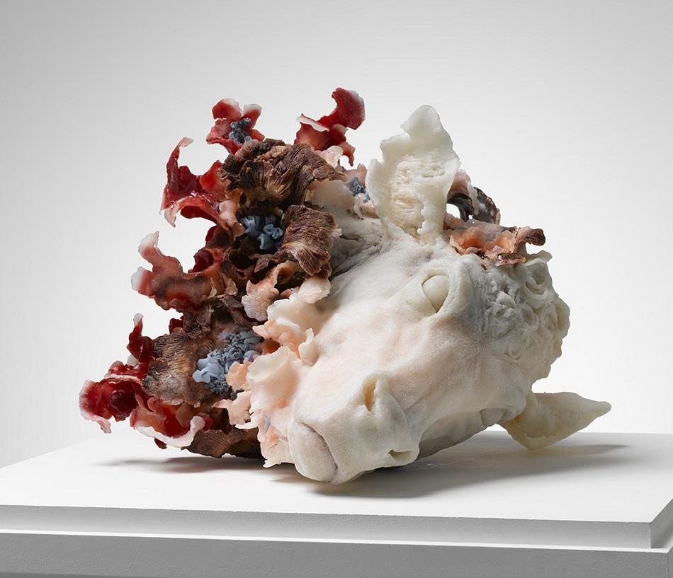 Rebecca Stevenson - Animals Art Flowers - 4578965