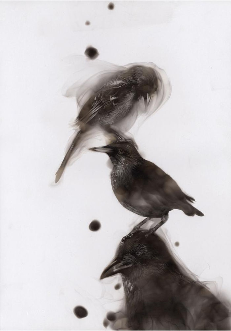 Steven Spazuk - Bird Paintings with Soot 456963