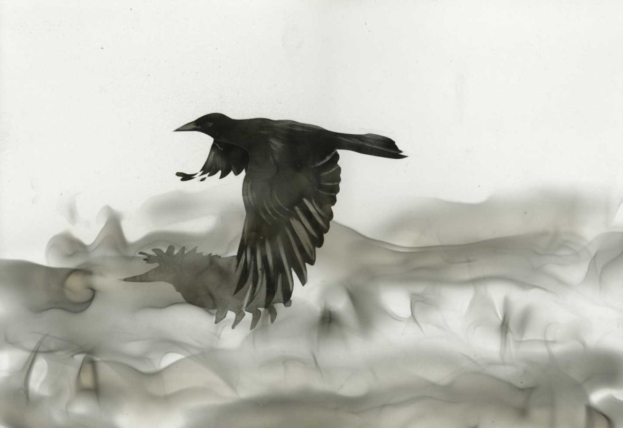 Steven Spazuk - Bird Paintings with Soot 542623
