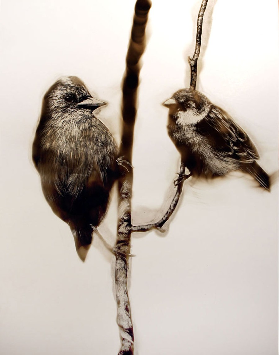 Steven Spazuk - Bird Paintings with Soot 575869