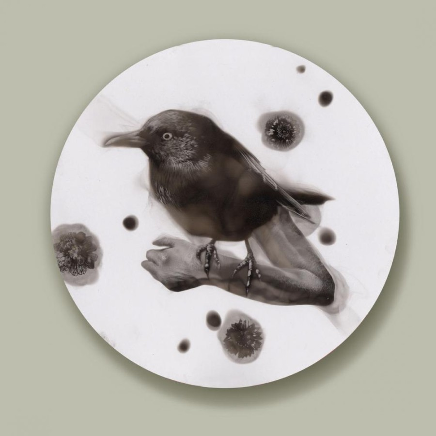 Steven Spazuk - Bird Paintings with Soot 8142666