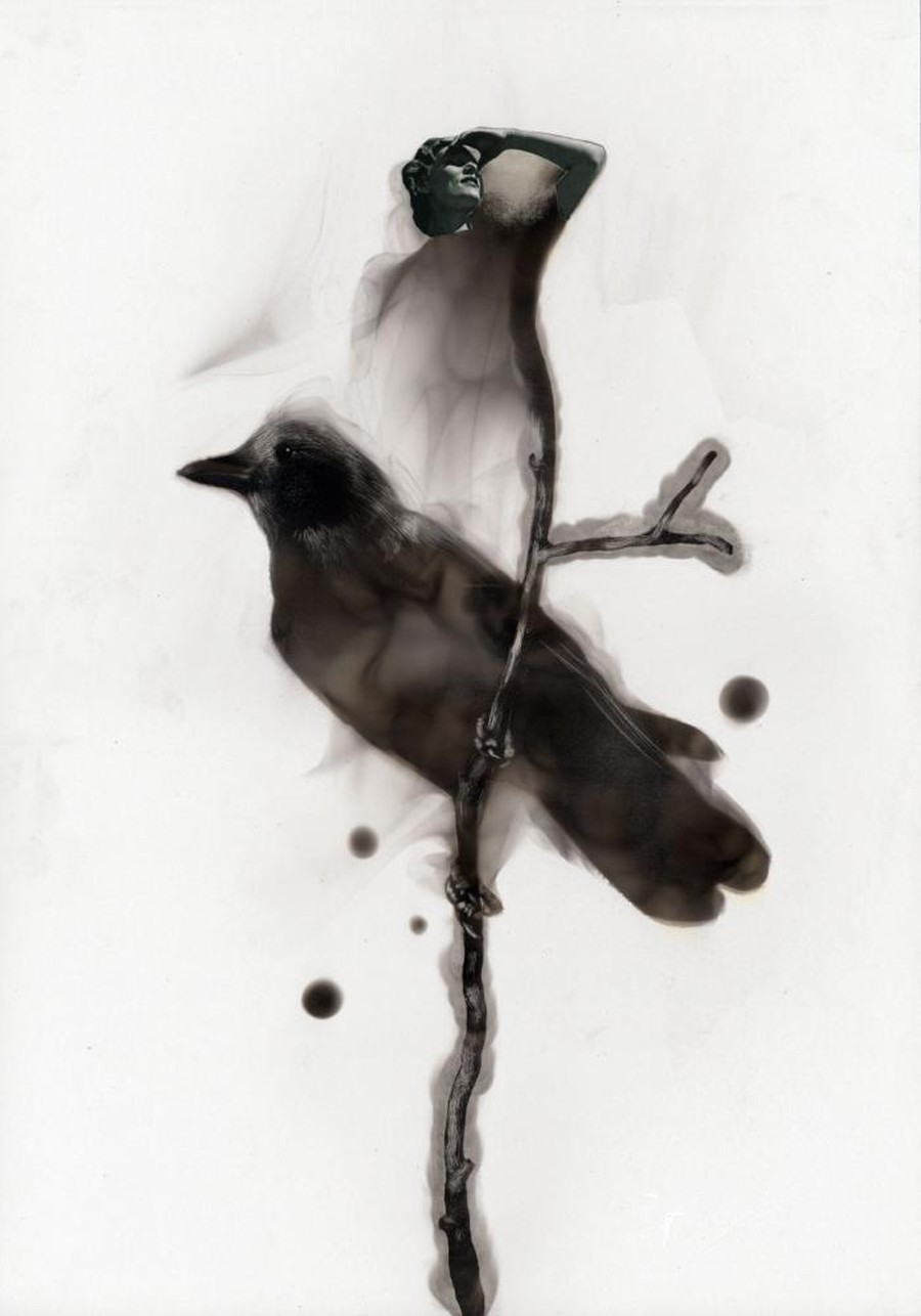 Steven Spazuk - Bird Paintings with Soot 8569214
