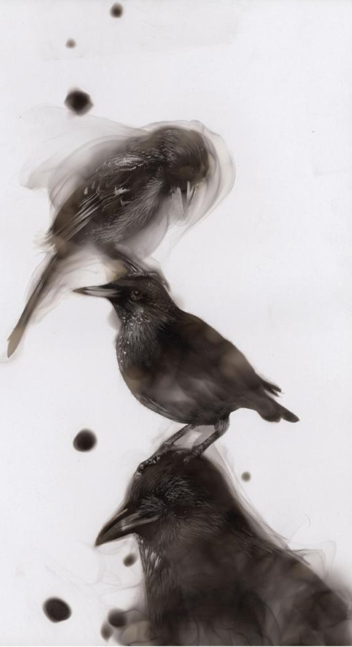 Steven Spazuk – Bird Paintings With Soot Feature
