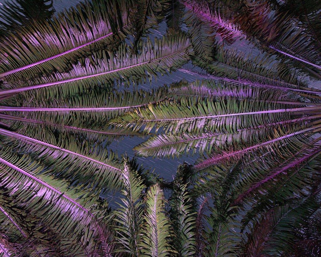 Benoit Paillé Photography Nature After Taking LSD Natured 45tyu8