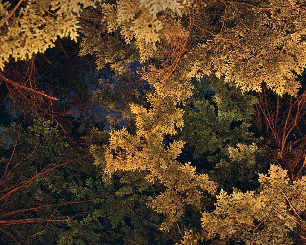 Benoit Paillé Photography Nature After Taking LSD Natured 75201