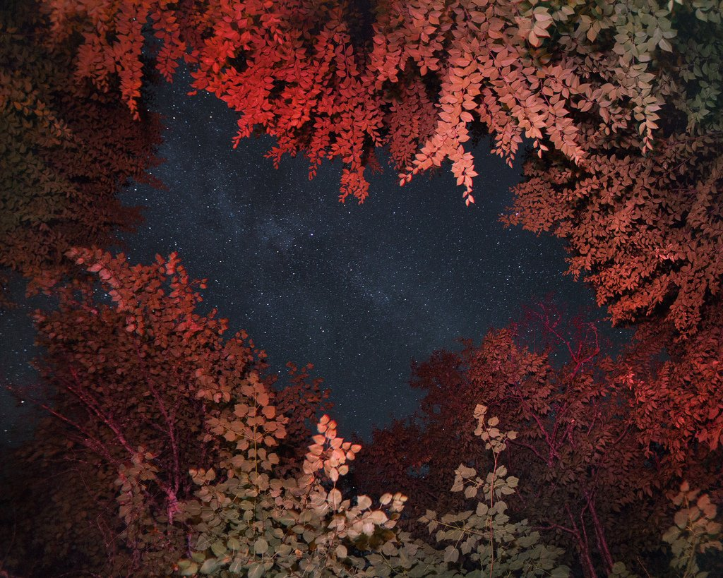 Benoit Paillé Photography Nature After Taking LSD Natured 77ada