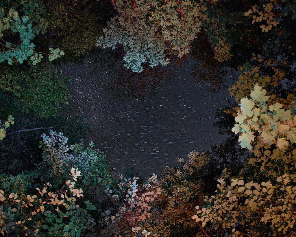 Benoit Paillé Photography Nature After Taking LSD Natured f83ca