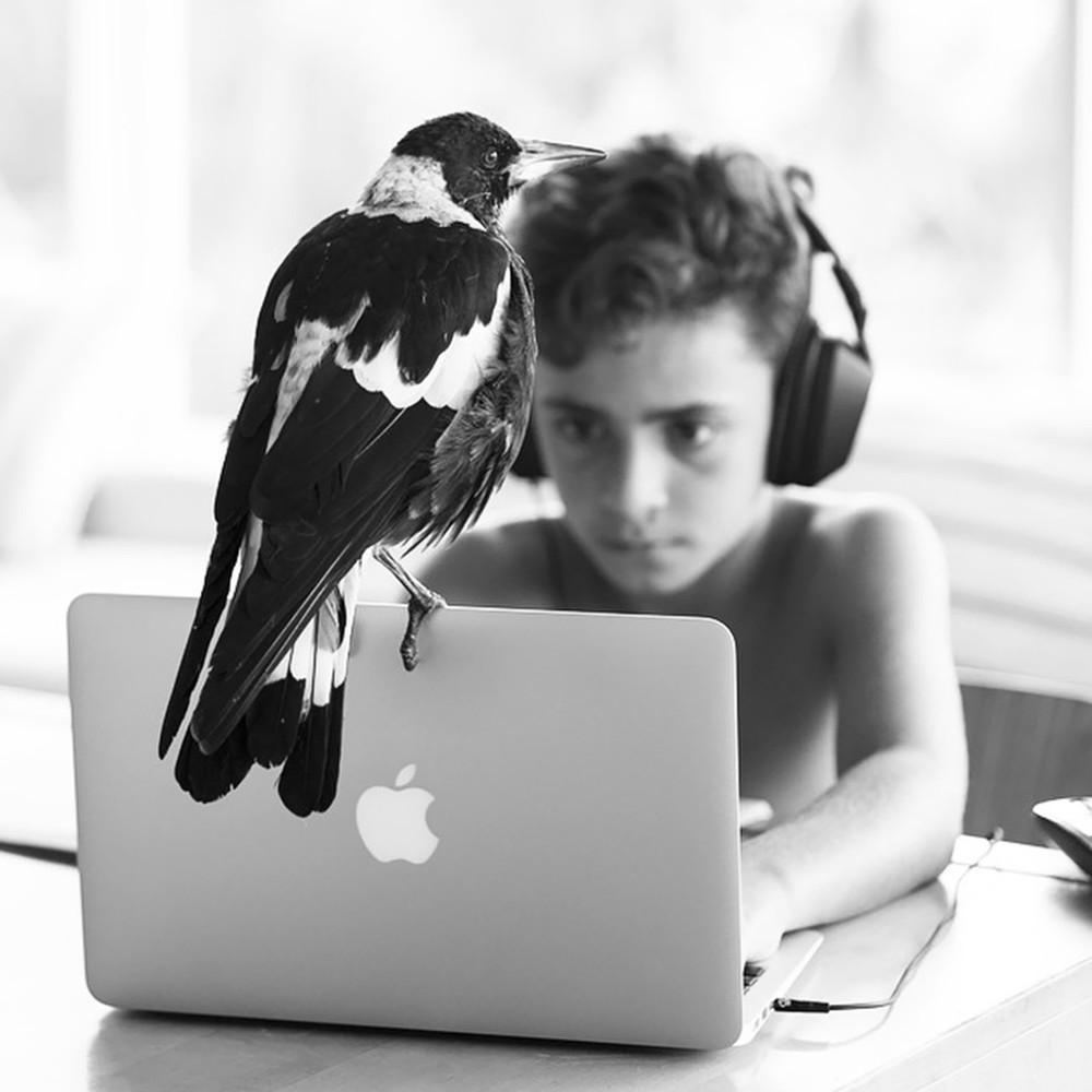 Cameron Bloom Photos - Sons Magpie bird Penguin 7111