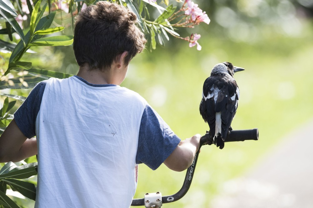 Boy Best Friends with Magpie
