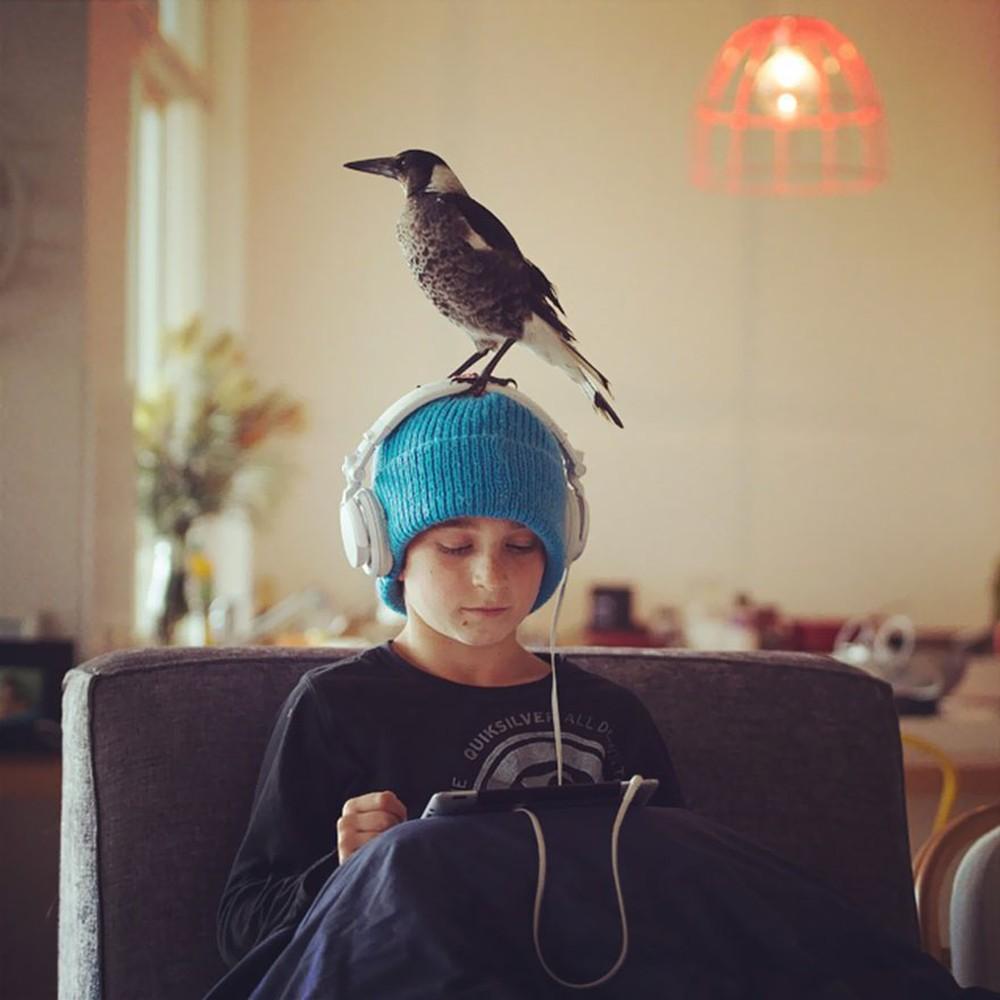 Cameron Bloom Photos - Sons Magpie bird Penguin 8369