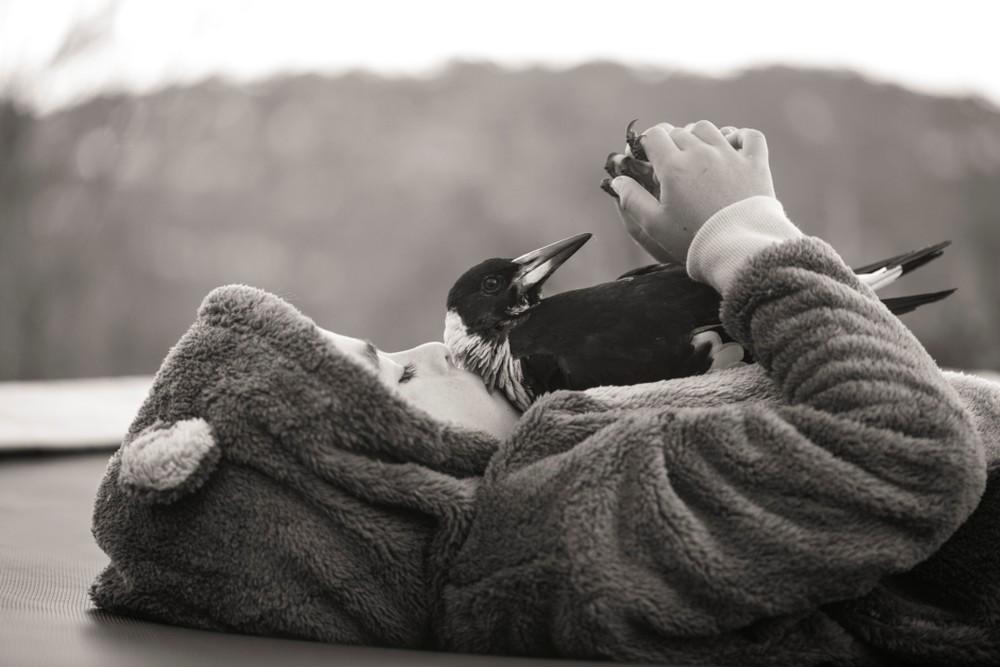 Cameron Bloom Photos - Sons Magpie bird penguin 4856