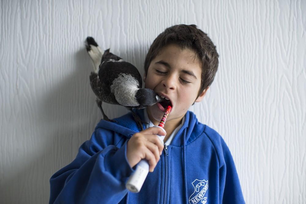Cameron Bloom Photos - son bird penguin