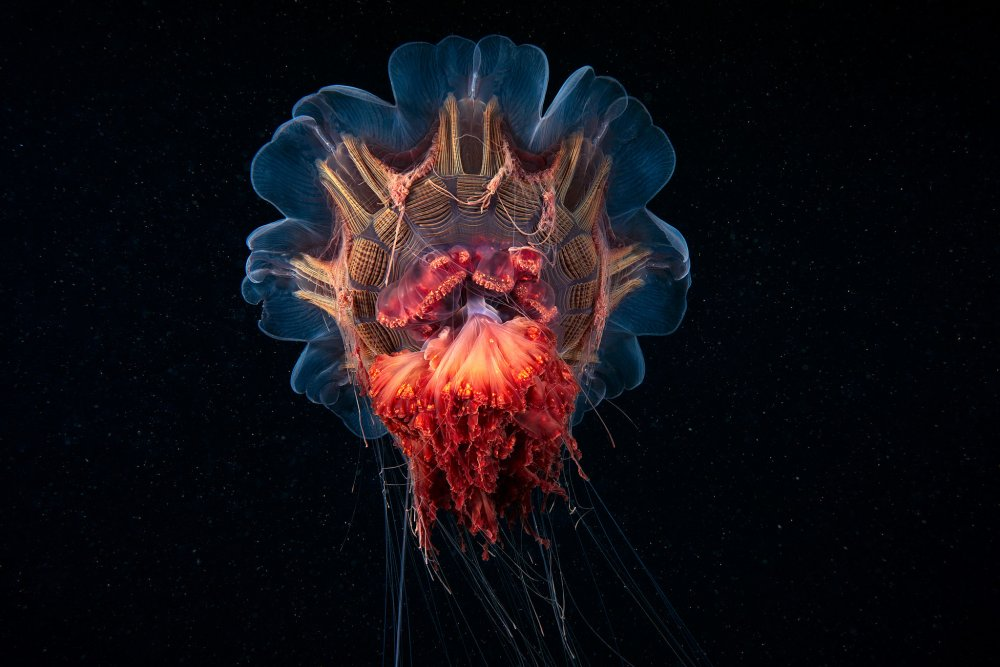 Alexander Semenov-Photography-Sea-Creatures-0defe21_k