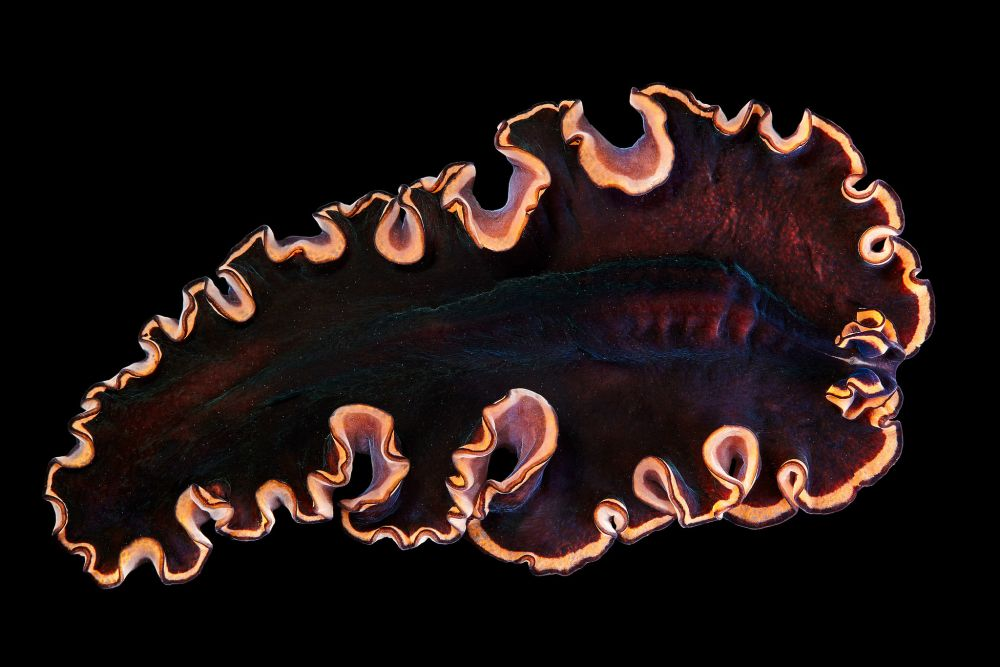 Alexander Semenov-Photography-Sea-Creatures-d99b_k